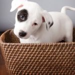 What You Need To Consider Before Choosing a Pet